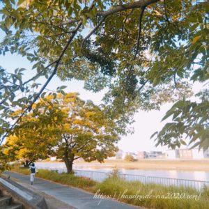 川沿いの木漏れ日の朝、散歩をする人の風景
